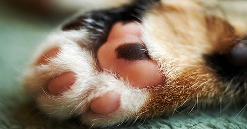 Giustizia per il gattino lasciato agonizzare per 8 ore! gattomugello