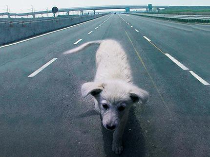 Petizione Non regalare animali domestici per le feste  controabbandonoanimali