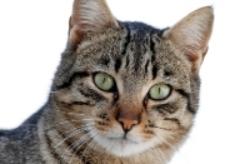 L'ouverture du premier bar à chats très contestée