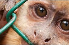 Jesigne soutien Stop Vivisection
