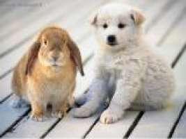Stop all'abbandonamento dei nostri amici Animali!