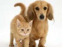Stop violenza sugli animali!
