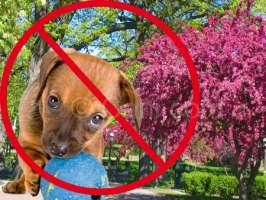 Sindaco vieta ai cani accesso ai giardini