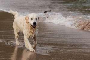 Libero accesso agli animali domestici nelle spiagge della Sardegna.
