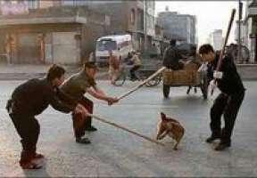 FERMIAMO IL MASSACRO DI ANIMALI IN CINA