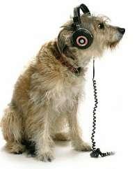 tuteliamo gli animali dai decibel