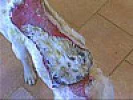 Cane bruciato vivo nel Comune di Sorso (SS)