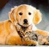 vai al gattile o al canile a prenderlo