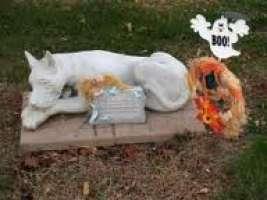si ,al cimitero per animali a catania