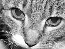 gattile-di-torino