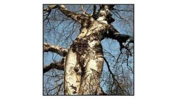 libere donne e liberi alberi