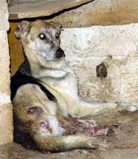 PETIZIONE PER LA LOTTO CONTRO L'ABBANDONO E IL MALTRATTAMENTO DEGLI ANIMALI