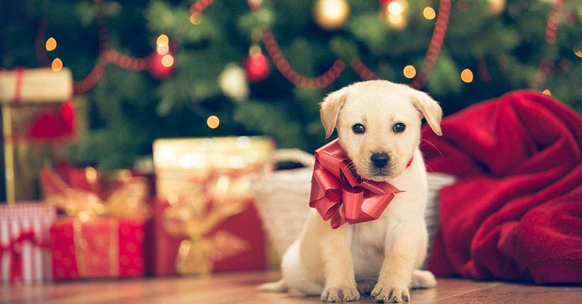 Proibito vendere cuccioli a Natale