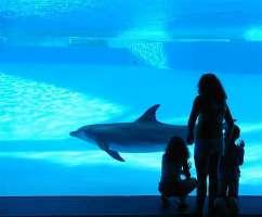 Petizione per vietare l'utilizzo di animali vivi nell'Acquario di Roma