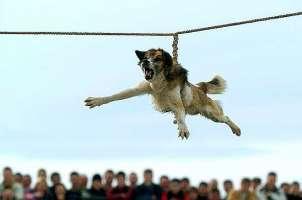 Firma contro il volo del cane a Brodilovo