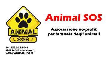 Chiediamo regolamento a favore degli animali a Carmagnola