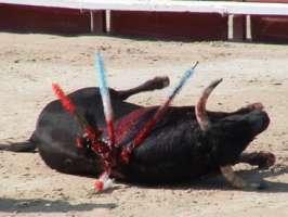 ABOLIAMO LA CORRIDA E TUTTI I MALTRATTAMENTI AGLI ANIMALI