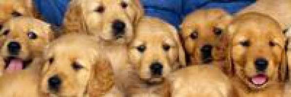 contro il massacro di cani e gatti a scopo alimentare