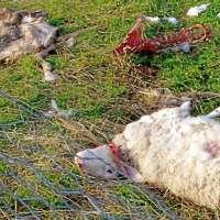 STOP ALLE SCENE DI MALTRATTAMENTO DEGLI ANIMALI NEI FILM!