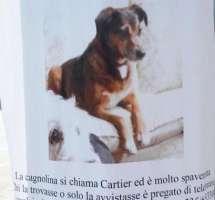 Salviamo la cagnolina Cartier