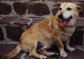 Abolizione tetto spese veterinarie detraibili