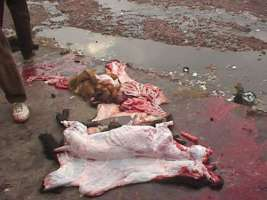 Io dico NO alle pellicce