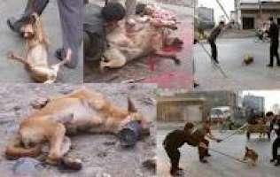 Basta alle orrende uccisioni di cani in Ucraina