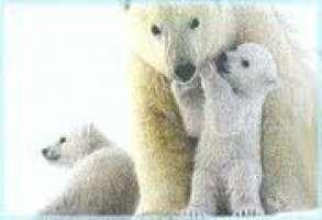 AIUTAMO GLI ANIMALI A VIVERE DIGNITOSAMENTE!!