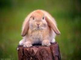 Firma per gli amici conigli