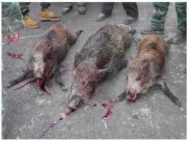 Fermiamo questi assassini.