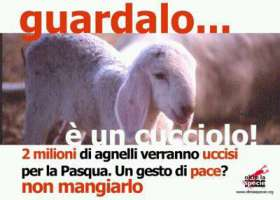 Fermiamo il massacro di agnelli per la pasqua.