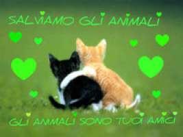 Fermiamo Genta Giuseppe, veterinario macellaio!