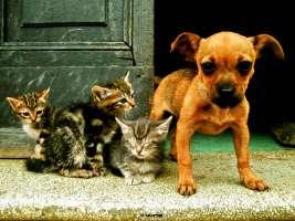vogliamo cure gratuite per gli animali