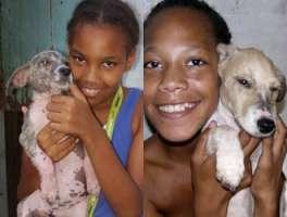 Salviamo i cani di Capo Verde a rischio avvelenamento