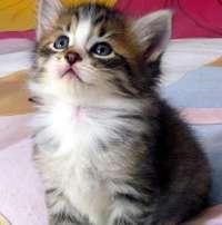 Contro la mattanza dei gatti randagi in Svizzera