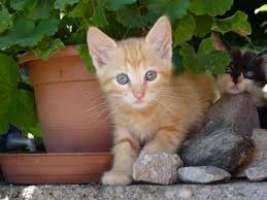 Salviamo i gattini di Torino gettati dal tetto