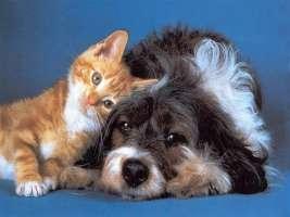Attenzione: polpette di vetro x uccidere cani e gatti
