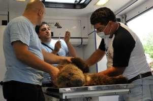 Un rifugio sicuro per Naia, orsetto sfortunato