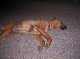 Cani sventrati per portare droga.Denunciamo subito