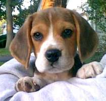 Vuoi dare una casa ad un cucciolo di Green Hill? Ora puoi