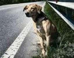 Abbandonare un cane è un gesto disumano. Non farlo