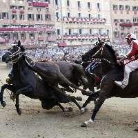 Palio di Siena: strumento di morte per i cavalli