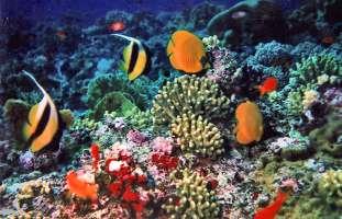 Proteggiamo il tesoro sotto l'oceano: la barriera corallina