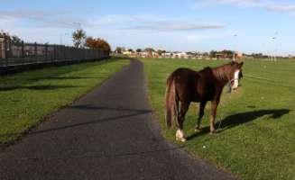 Salviamo i cavalli abbandonati per gli alti costi del fieno