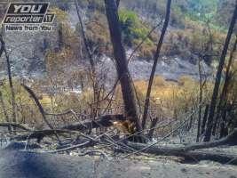Maggiori condanne Piromani e tutela delle aree boschive