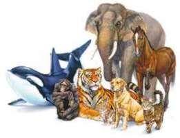 Basta al circo con animali