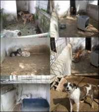 Salviamo i 100 cani del canile di Domicella