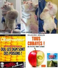 Approfondimento questione Mais OGM emersa in Francia