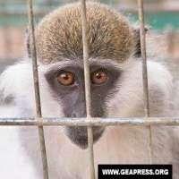 Toscana: non finanziare ricerche su animali di Novartis