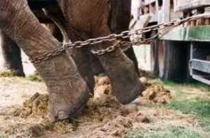 petizione contro il maltrattamento degli animali del circo